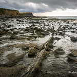 Petrified Forest, Curio Bay, Catlins thumbnail