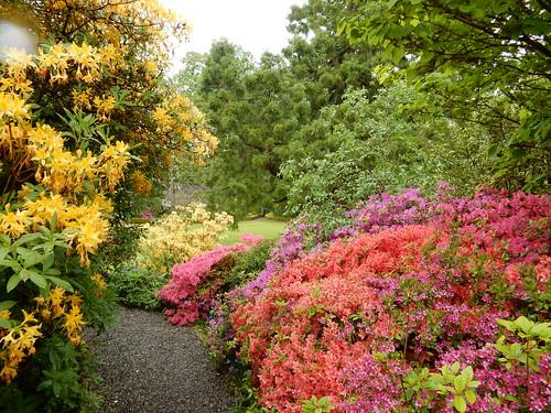 Spring gardens, Geilston