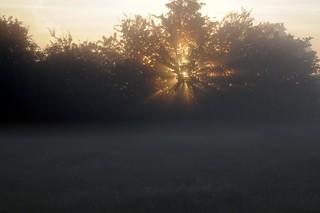 Sonnenaufgang über den Rinderweiden; Bergenhusen, Stapelholm (86)