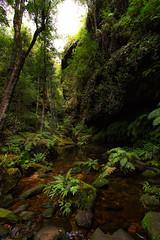 At the bottom of the gully (Jutta Sund) Tags: gully creek water rock tree fern glen canyon