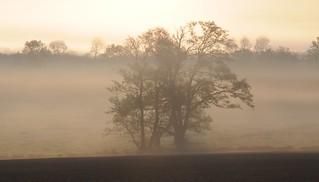 Morgens beim Rinder Zählen; Bergenhusen, Stapelholm (25)