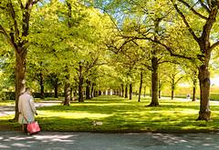 walk (Nir Roitman) Tags: travel europe germany munich park trees sky nature urban dog grass man pug deutschland bavaria münchen