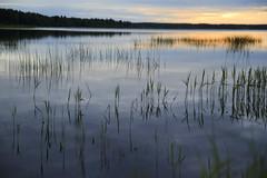 Solnedgång Furufjärden (srchedlund) Tags: uteistugan srchedlund solnedgång sunset water reed vass norrbotten furufjärdenbrändön reflections atmophere