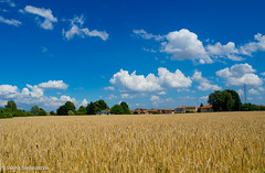 Between sky and earth (Valeria Santacaterina) Tags: landscape country cereals sky cielo nuvole clouds colori colors luce light summer summertime paesaggio panorama peace bigcalm countryside fields goldcereals