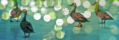 If it walks like a duck, quacks like a duck, looks like a duck, it must be a duck (soniaadammurray - Off) Tags: digitalphotography manipulated experimental diptych collage abstract ducks bokeh walk quake look duck cliche clichesaturday hcs