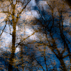 Trees In Water 115 (noahbw) Tags: captaindanielwrightwoods d5000 desplainesriver nikon abstract branches clouds forest landscape leaves natural noahbw reflection river silhouette sky square trees water winter woods