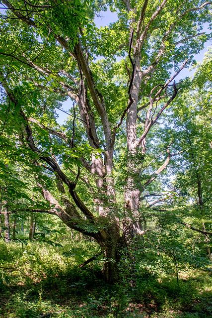 Loon Lake Nature Preserve - June 21, 2017