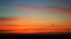 Pajonal (Eduardo Amorim) Tags: pôrdosol poente entardecer poniente atardecer sunset tramonto sonnenuntergang coucherdesoleil crepúsculo anoitecer riogrande riograndedosul brésil brasil sudamérica südamerika suramérica américadosul southamerica amériquedusud americameridionale américadelsur americadelsud brazil eduardoamorim