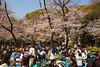 Ueno Park Hanami Festival (Sir Tificate) Tags: canon 5d mark iii 35mm f14l ii japan tokyo hanami