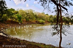 Full of cranes, Deers and Crocodiles in Zone 4 of Ranthambhore National Park, India (Immature Photography LLP) Tags: cranes india ranthambhore nationalpark wildlife landscape