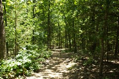 IMG_1193 (steveaylor) Tags: branson missouri flowers trail forest stone steps