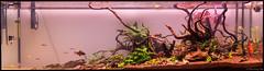 Sealed Grounds. (dearwalrus) Tags: vivaline aquarium acuari wood drift sand jbl sansibar orange dragon stone manado 330 eheim acuario canon 70d sigma 1750