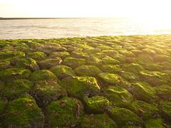 Algen auf Basalt (Jörg Paul Kaspari) Tags: baltrum sommer 2017 abendsonne buhne basalt basaltbuhne begrünt bewachsen algen grün green küstenschutz ebbe
