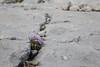 expo-8345 (ernst.scherr) Tags: rot adamekhütte gosau dachstein salzkammergut gletscher schnee natur mondaufgang mondlicht sonnenuntergang alpen pflanzen