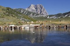 Campo imperatore (Dalia-Nera) Tags: campoimperatore gransasso montagna mountain lake lago mucche pascoli