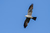 IMG_5156 (DavidMC92) Tags: canon eos 7d tamron sp 70300mm will rogers park oklahoma city mississippi kite