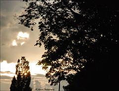 A Sign from Above (John Neziol) Tags: jrneziolphotography nikon nikond80 nikoncamera nikondslr sunset sun sunshine summersunset sunlight nature outdoor brantford tree trees heart heartinthesky sky love beautiful
