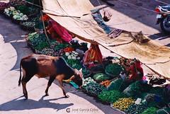 20031030 India-Rajastán (14) Pokaran (Nikobo3) Tags: asia india rajastán pokaran travel viajes rural película fujicolorsuperia100iso nikon nikonf70 f70 sigma70300456 nikobo joségarcíacobo flickrtravelaward social people gentes sit sitting seated