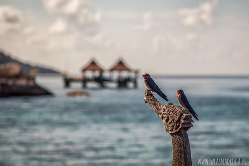 Spacer po wyspie