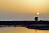 De vuelta a casa... (ZAP.M) Tags: crepúsculo atardecer cielo contraluz naturaleza nature paisaje marisma carbonero chiclana cádiz andalucía españa flickr zapm mpazdelcerro nikon nikond5300