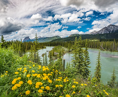Mountain Nature landscape (tibchris) Tags: banff banffnationalpark mountains flowers rivers nature park clouds canada albertatravel travelalberta travel landscape dandilion