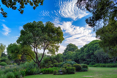 Tarde bucólica (Cerratín (Off for a week)) Tags: distagon282zf árboles paisaje cielo nubes clouds jardínchino chinesegarden distagon 28mm nikon d750 zeiss china wuxi jiangsu
