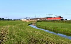 Spoorweglaan, trein Seelze-Kijfhoek (Ahrend01) Tags: spoorweglaan moordrecht seelze kijfhoek db cargo br 189