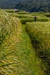 IMG_0596 (Ela&Piotr) Tags: bali indonesia indonezja jatiluwih ricefields