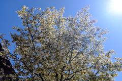 Frühjahrsblüte