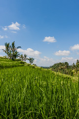 IMG_0641 (Ela&Piotr) Tags: bali indonesia indonezja jatiluwih ricefields