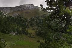 _DSC6153-2 (Nadja E.) Tags: achensee berg tirol rofan landschaft baum rofanbergstation