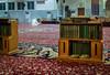 Praying man inside a Mosque (unique KSA) Tags: riyadh riyadhprovince saudiarabia
