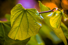 Colors and light..... (tomk630) Tags: virginia sunrise colors light leaves nature bokeh beautyinnature