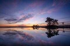 Maraetotora Mirror (lizcaldwell72) Tags: hawkesbay sunrise cloud reflection sky maraetotorariver water newzealand light