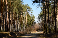 spring as it is (JoannaRB2009) Tags: spring sunny nature forest woods tree trees path road sand sandy sunshine light shadow łódzkie lodzkie polska poland landscape view march