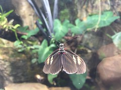 (eyair) Tags: ashmashashmash uk london england dulwich hornimanmuseum aquarium butterfly