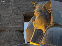 Amun-Ra (Karnevil) Tags: africa egypt luxor thebes luxortemple ramessesii upperegypt valleyofthekings thebanhills eastvalley westofthenile thebannecropolis royalnecropolis pharaohs worldheritagesite amunra egyptianhieroglyphics hieroglyphics ramesses nineteenthdynasty 19thdynasty lx100 panasonic petekreps