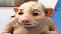 """Bu Yeni İcat, Evcil Hayvan """"Genpetler"""" Görenleri Çok Şaşırtacak! (BilioBu.com) Tags: evcilhayvan genpet genpetler oyuncak oyuncakhayvan"""