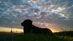 WP_20170706_05_14_13_Pro Summer Sunrise (Jo. Jo.) Tags: labrador sunrise vanishing point clouds arable fields