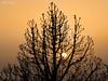"""Tras la Quema (Tenisca """"Alexis Martín"""") Tags: puestasdesol ocaso sunset ocasos sunsets alexismartín alexismartin alexismartínfotos alexismartinfotos amfotos elpaso lapalma árboles árbol tree"""