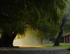 LA LUZ. (NIKONIANO) Tags: luz light laluz árbol tree paisaje landscape lumiere camécuaro michoacán méxico regiónzamora nature naturaleza vegetación ramas larama arbre