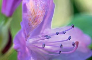 flower minions (explored)