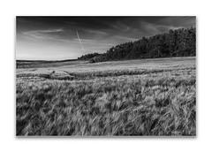 summertime (Karl-Heinz Bitter) Tags: landscape landschaft nordhessen getreide himmel wald volkmarsen sommer wolken monochrom monochrome blackwhite blackandwhite summer clouds sky frame