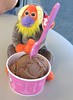 Peanit Butter and Chocolate Ice Creams (Laura's Favorites) Tags: g bananasbeaniebaby babies monkey monkeys orangutans orangutan ice creams cream birthday celebration 31 flavors baskin robbins peanut butter chocolate spoon ty