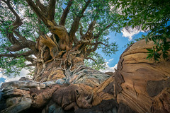 Animal Kingdom - Among the Roots (Jeff Krause Photography) Tags: animal carving disney kingdom life park tol tree wdw theme kissimmee florida unitedstates us