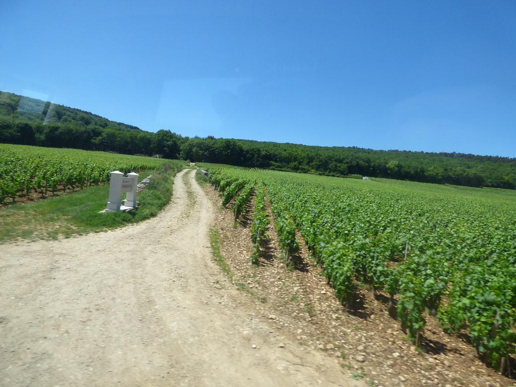 ブルゴーニュのブドウ畑のクリマの画像 p1_21