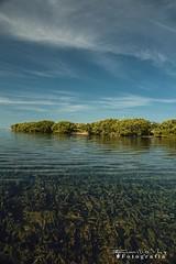 Isla Cerritos 6968 ch (Emilio Segura López) Tags: isla islacerritos mar algas cielo nube sanfelipe yucatán méxico