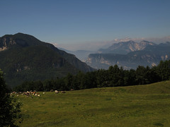View with cattle (aniko e) Tags: alm cows sattle alpine meadow etschtal brenta brentagroup italy italien südtirol altoadige truden trodena hiking summer valley mist dolomites cislon landscape view panorama green