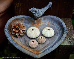 Heart Shaped (nigelboulton72) Tags: bird heart sea urchin shell pine cone love