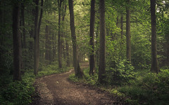 A Walk in the Woods (Netsrak) Tags: baum eu europa europe forst landschaft natur nebel wald fog forest landscape mist nature tree trees woods bäume eifel rheinland rhineland rheinbach nordrheinwestfalen deutschland de